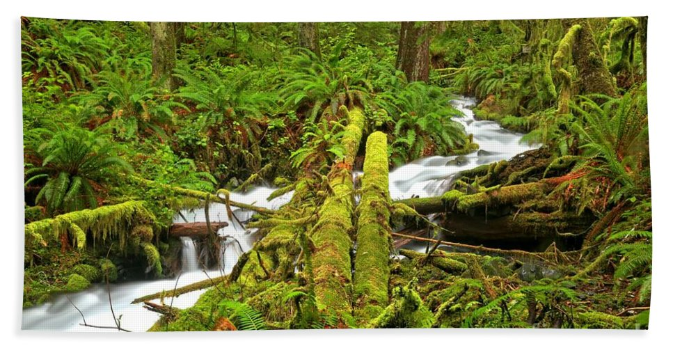 Rainforest Beach Towel featuring the photograph Gushing Through Ferns And Forest by Adam Jewell