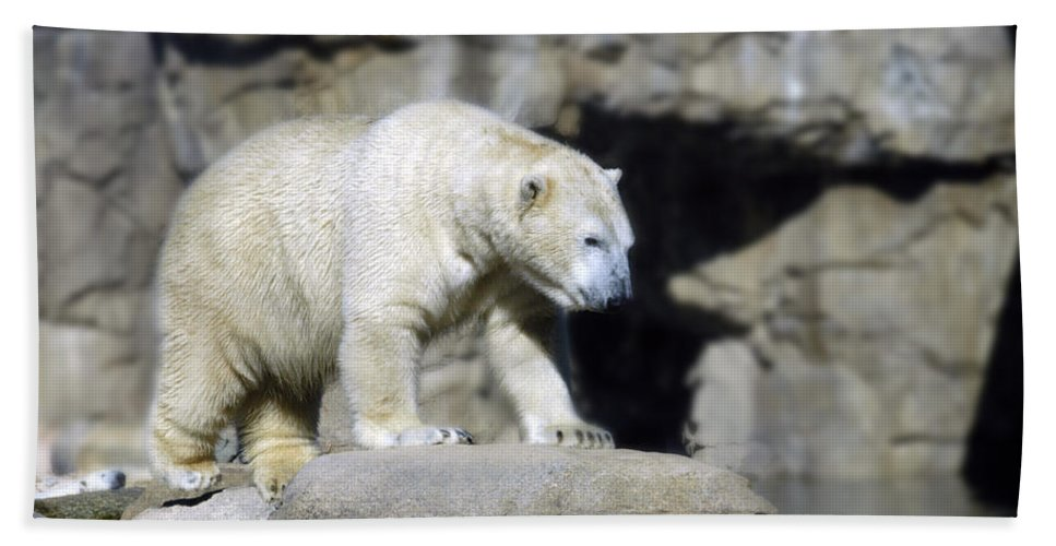 Memphis Zoo Beach Towel featuring the photograph Habitat - Memphis Zoo by D'Arcy Evans
