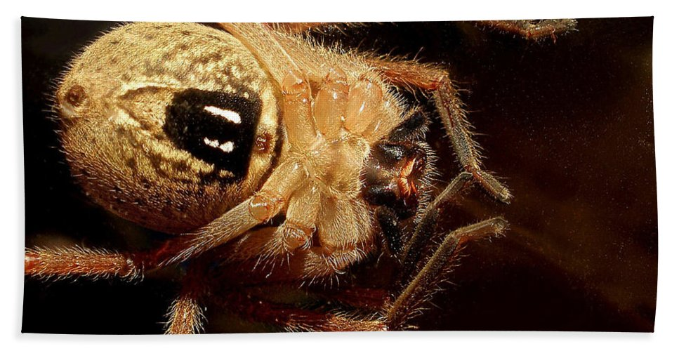 Photography Beach Towel featuring the photograph Hairy Spider by Kaye Menner