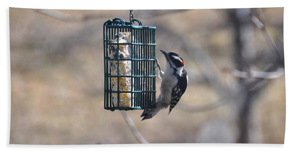Bird Beach Towel featuring the photograph Hairy Woodpecker 1 by Rich Bodane