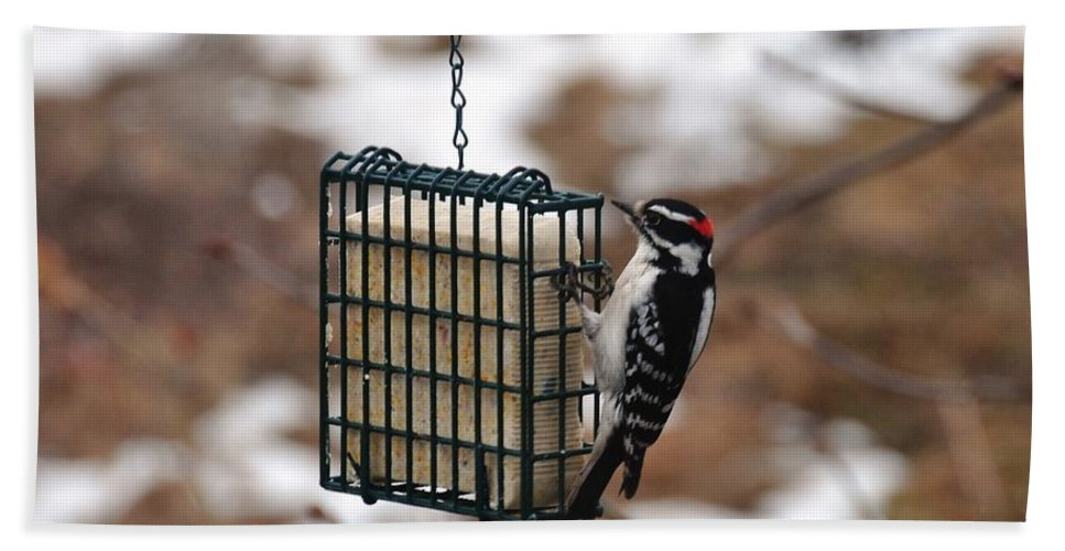 Bird Beach Towel featuring the photograph Hairy Woodpecker 2 by Rich Bodane