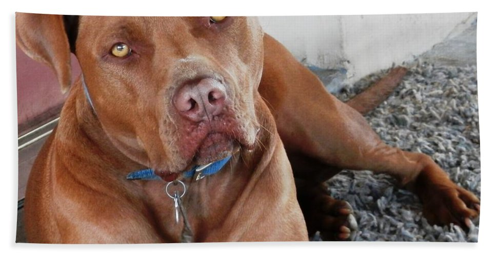 Beautiful Beach Sheet featuring the photograph Handsome Red Nose Pit Jak by Belinda Lee