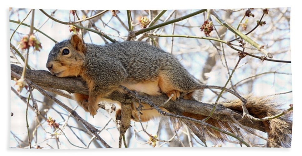 Squirrel Beach Towel featuring the photograph Hanging On by Lori Tordsen