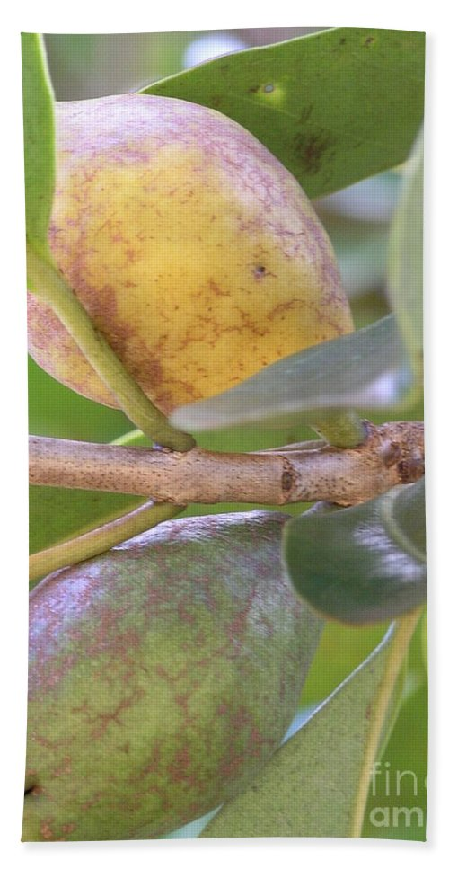 Green Beach Towel featuring the photograph Haole Guava by Mary Deal