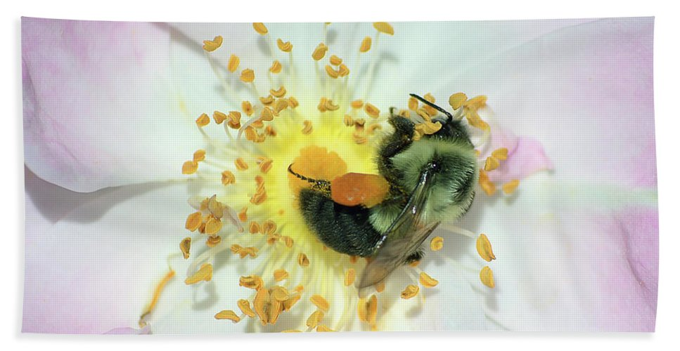 Bee Beach Towel featuring the photograph Happy Bee by George Fredericks
