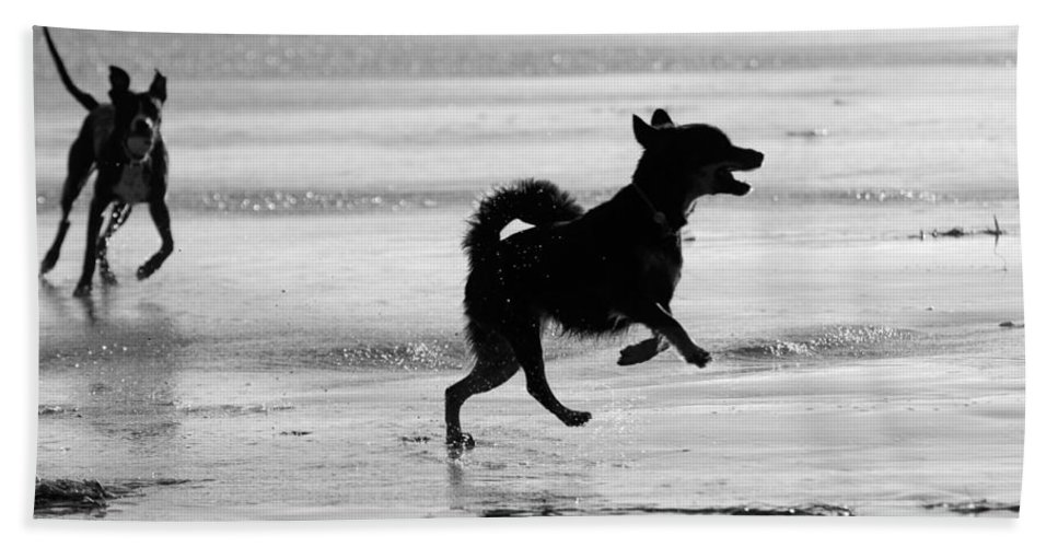 Black And White Beach Towel featuring the photograph Happy Dog Black And White by Jill Reger