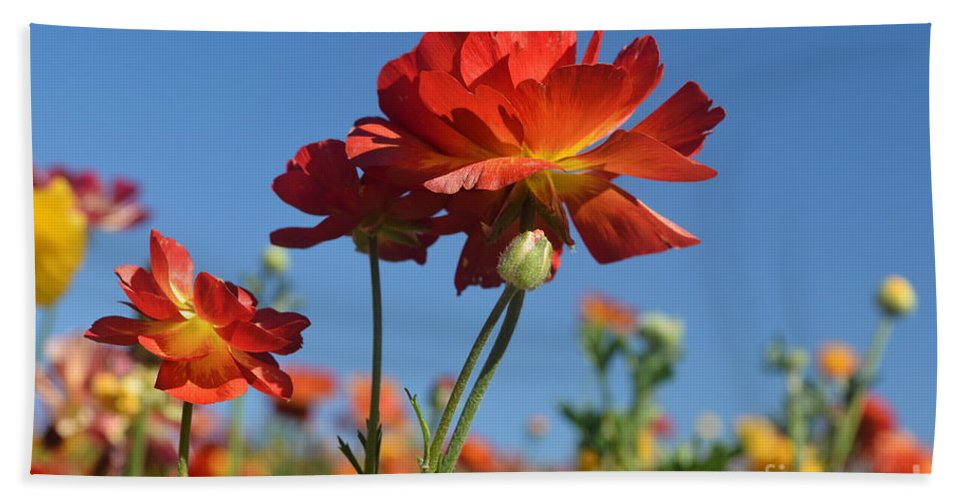 The Flower Fields At Carlsbad Beach Towel featuring the photograph Happy Mother's Day Flowers by Luv Photography