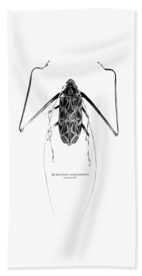 Black-and-white Beach Towel featuring the digital art Acrocinus I by Geronimo Martin Alonso
