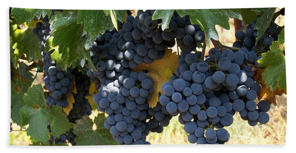 Grapes Beach Sheet featuring the photograph Harvest Time by Gale Cochran-Smith