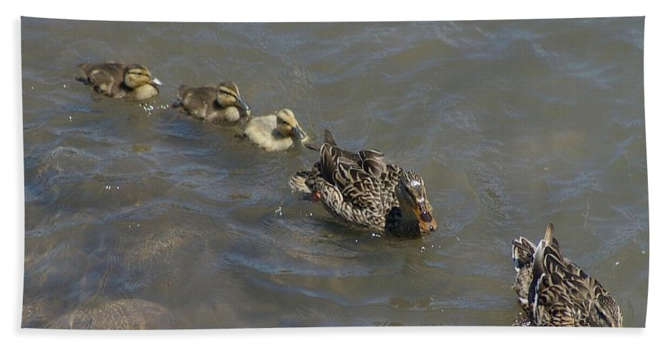 Fowl Beach Towel featuring the photograph Having Your Duckies In A Row by Jeff Swan