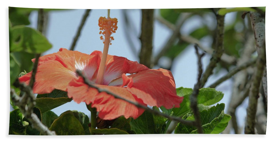 Florals Beach Towel featuring the photograph Hawaiian Beauty by Linda Dunn