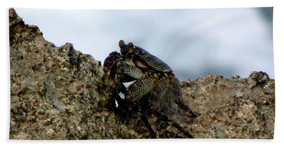 Crab Beach Towel featuring the photograph Hawaiian Crab Legs by Sarah Houser