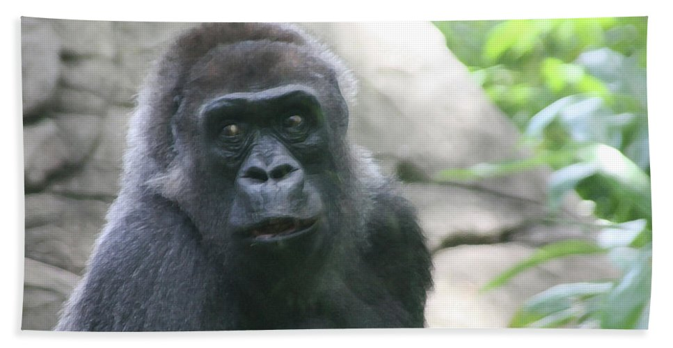 Primate Beach Towel featuring the photograph He Is Watching by Karol Livote