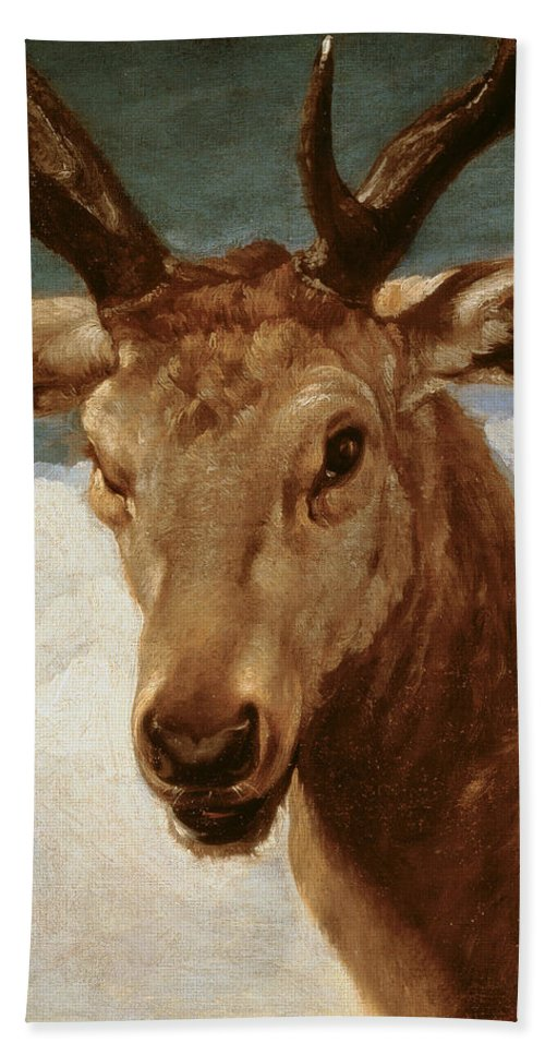 Head Beach Towel featuring the painting Head Of A Stag by Diego Rodriguez de Silva y Velazquez