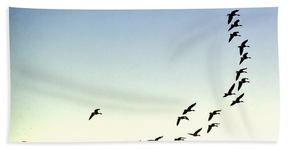 2d Beach Towel featuring the photograph Heading North by Brian Wallace