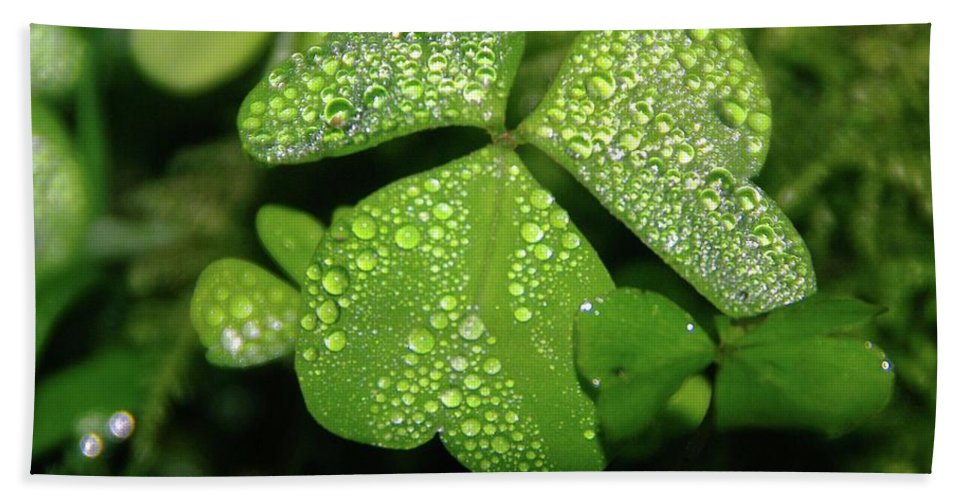 Leaves Beach Towel featuring the photograph Heart Shaped With Water Drops by Jeff Swan