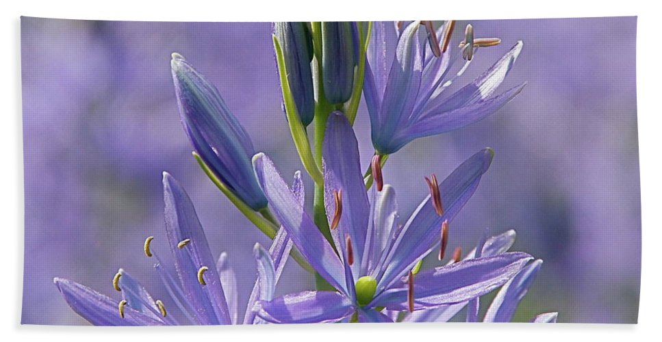 Floral Beach Towel featuring the photograph Heavenly Blue Camassia by Byron Varvarigos