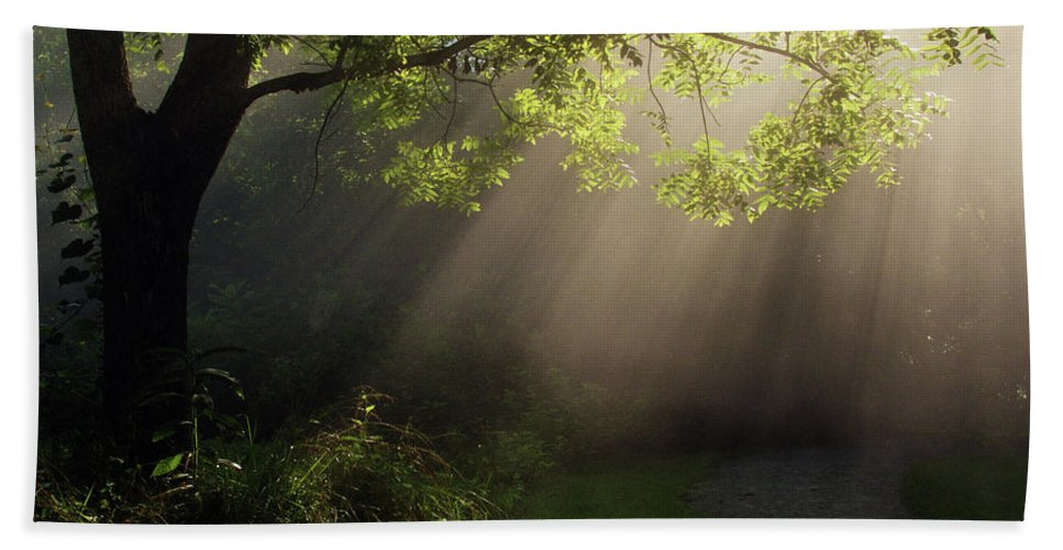 Tree Beach Towel featuring the photograph Heavenly Rays by Douglas Stucky