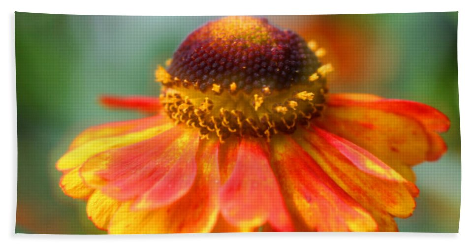 Flower Beach Towel featuring the photograph Heavenly Zinnia by Smilin Eyes Treasures