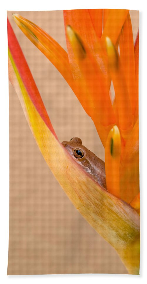 Frog Beach Towel featuring the photograph Heliconia And Frog by Steven Sparks