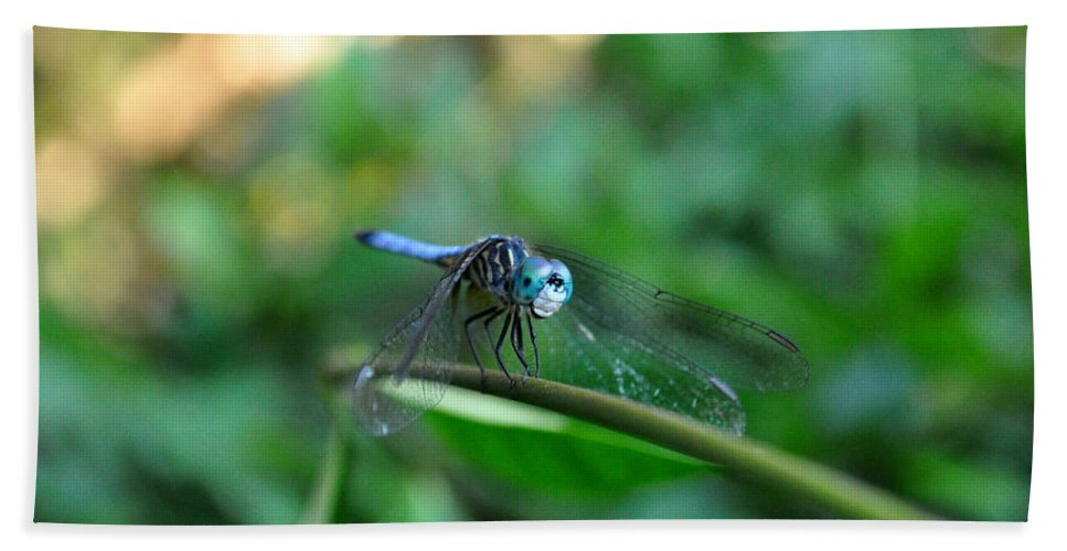 Dragonfly On Vine Beach Towel featuring the photograph Hello There by Debra White