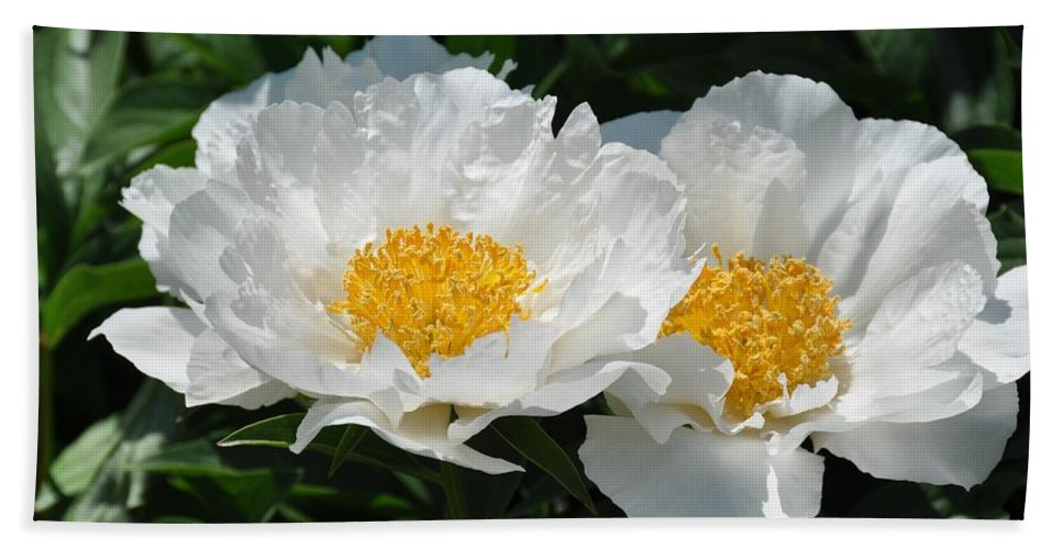 Flower Beach Towel featuring the photograph Herbaceous Peony 1 by Rich Bodane