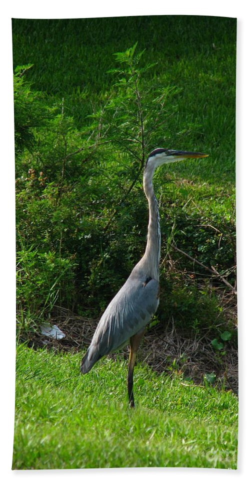 Patzer Beach Towel featuring the photograph Heron Blue by Greg Patzer