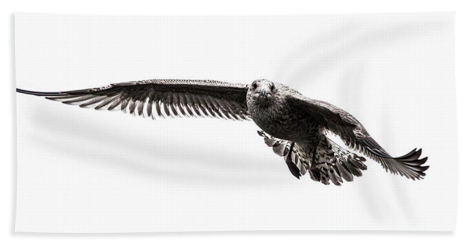 Herring Gull Beach Towel featuring the photograph Herring Gull I by Sebastian Worm