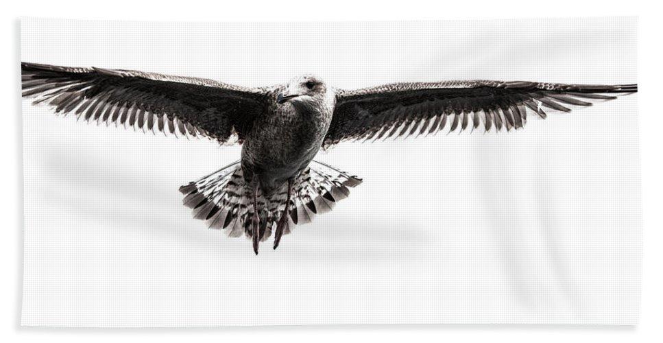 Herring Gull Beach Towel featuring the photograph Herring Gull IIi by Sebastian Worm