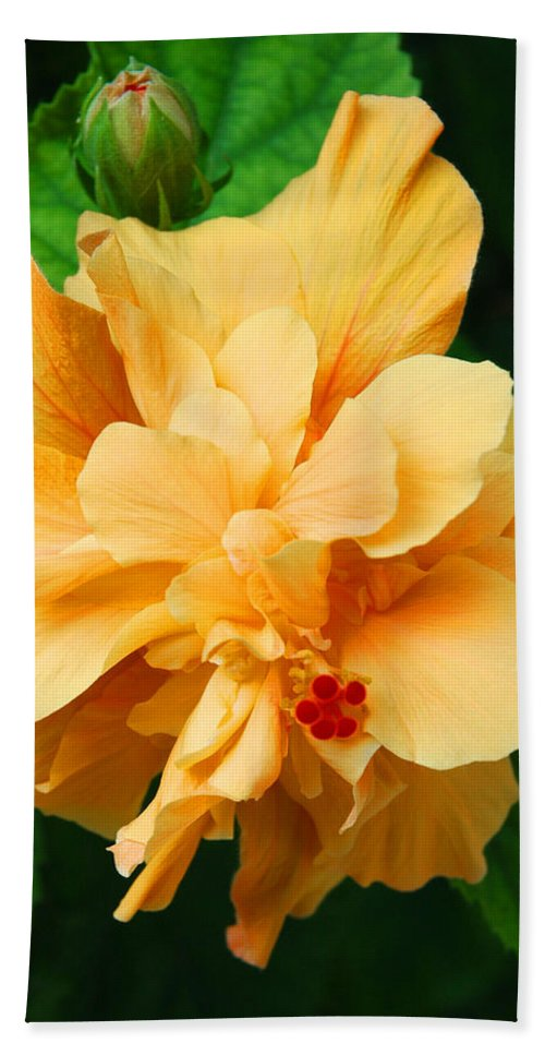 Hibiscus Beach Towel featuring the photograph Hibiscus by Susanne Van Hulst