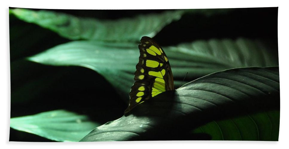 Butterfly Beach Towel featuring the photograph Hiding by Rich Bodane