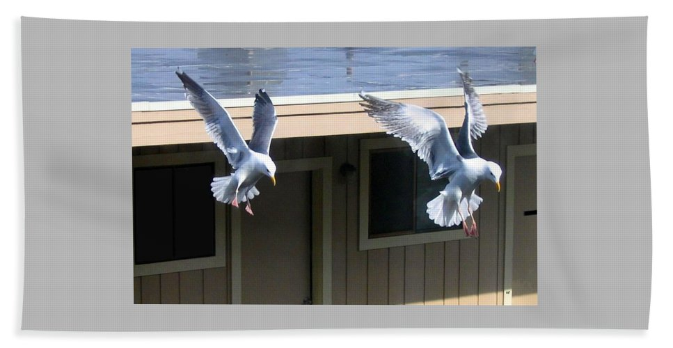 Seagulls Beach Towel featuring the photograph High Spirits by Will Borden