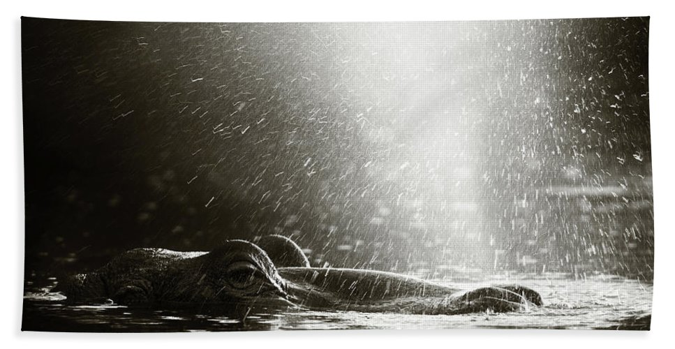 Africa Beach Towel featuring the photograph Hippo Blowing Air by Johan Swanepoel