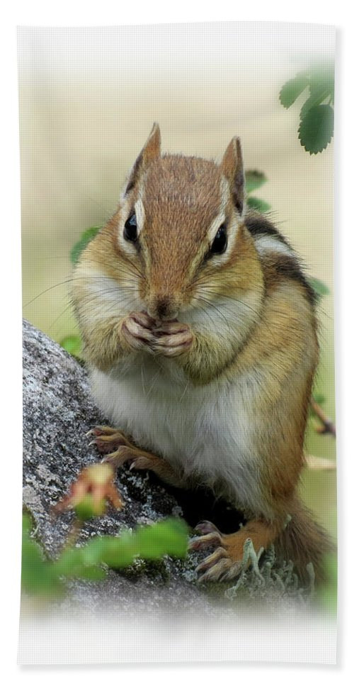 Chipmunk Beach Towel featuring the photograph Hippy Chip - Chipmunk - Vertical by MTBobbins Photography