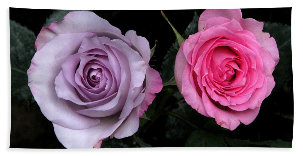 Rose Beach Towel featuring the photograph His And Hers by Peg Urban
