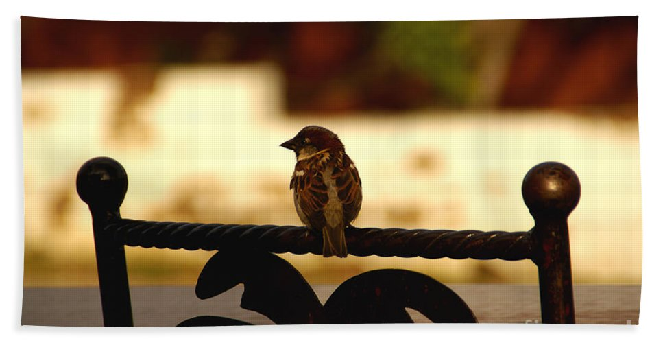 Bird Beach Towel featuring the photograph His Eye Is On The Sparrow by Linda Shafer