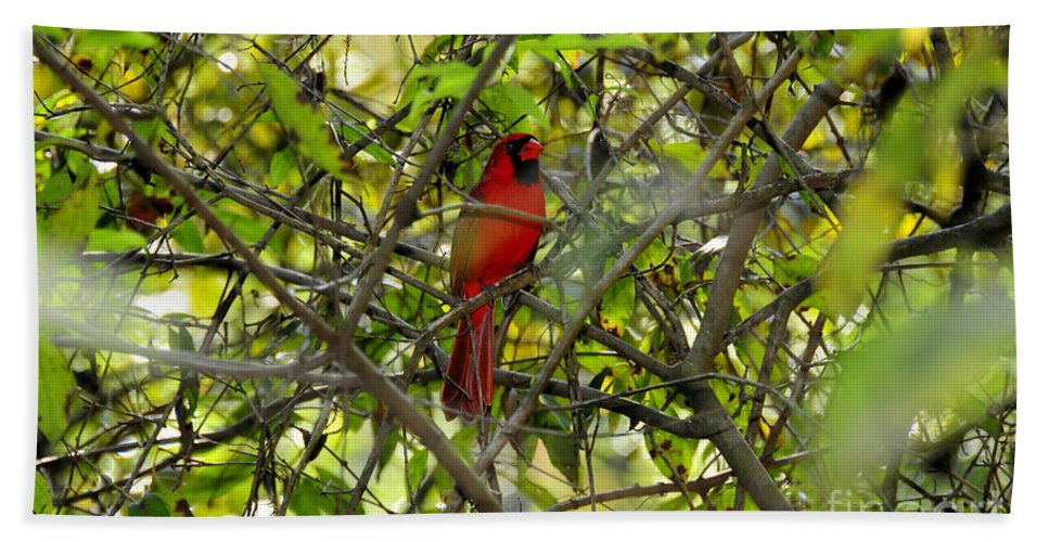 Red Beach Towel featuring the photograph His Majesty by David Lee Thompson