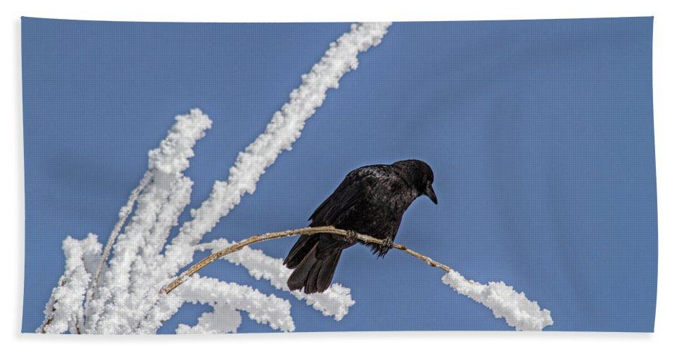 Frost Beach Towel featuring the photograph Hoarfrost and the Crow by Alana Thrower