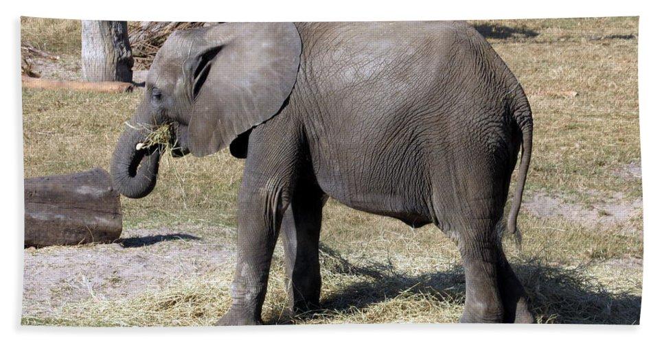 Elephant Beach Towel featuring the photograph Hobo by Sara Evans