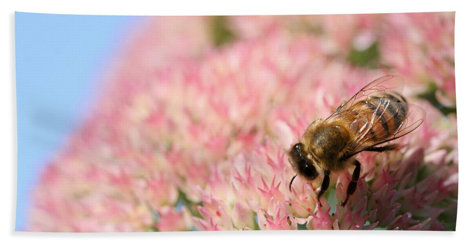 Bee Beach Towel featuring the photograph Honey Bee 3 by Angela Rath