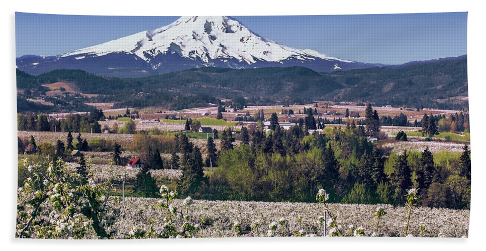 Orchards Beach Towel featuring the photograph Hood River Orchards by John Christopher