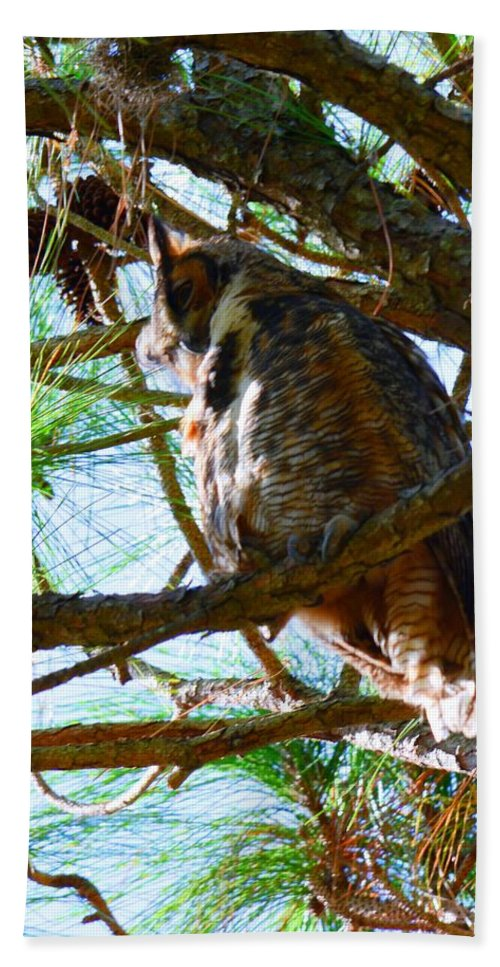 Hoot Is Down There Beach Towel featuring the photograph Hoot Is Down There? by Lisa Wooten