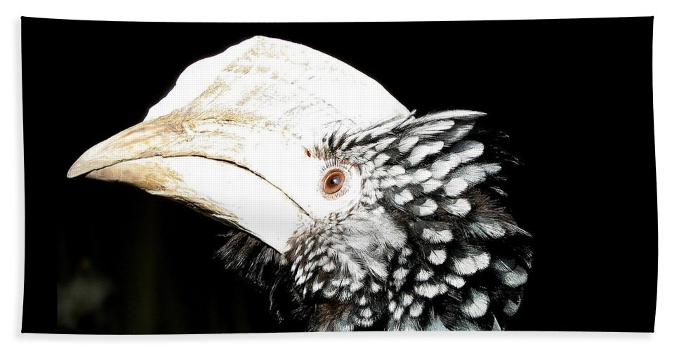 Hornbills Beach Towel featuring the photograph Hornbill Bird by Rose Santuci-Sofranko