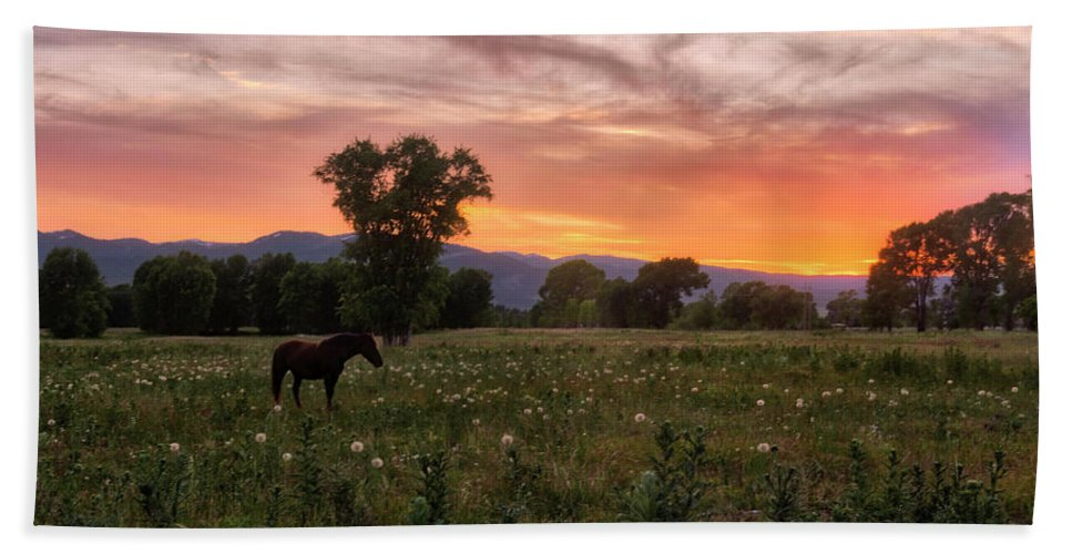Horse Beach Towel featuring the photograph Horse At Sunset by Stacy White