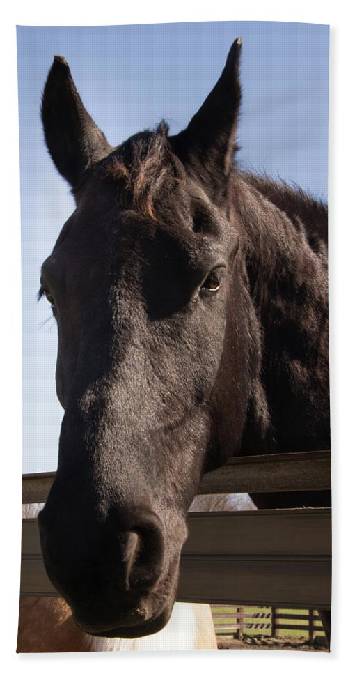 Horse Beach Towel featuring the photograph Horse By A Fence. by Diane Schuler