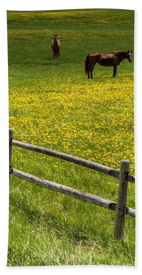 Finger Lakes Beach Towel featuring the photograph Horses In A Field by Ray Sheley
