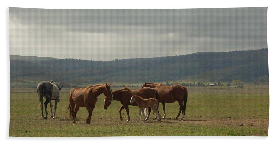 Horse Beach Towel featuring the photograph Horses by Sara Stevenson