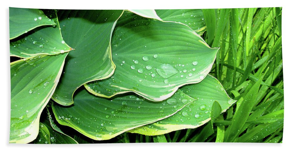 Close-up Beach Towel featuring the photograph Hostas And Grass by Nancy Mueller