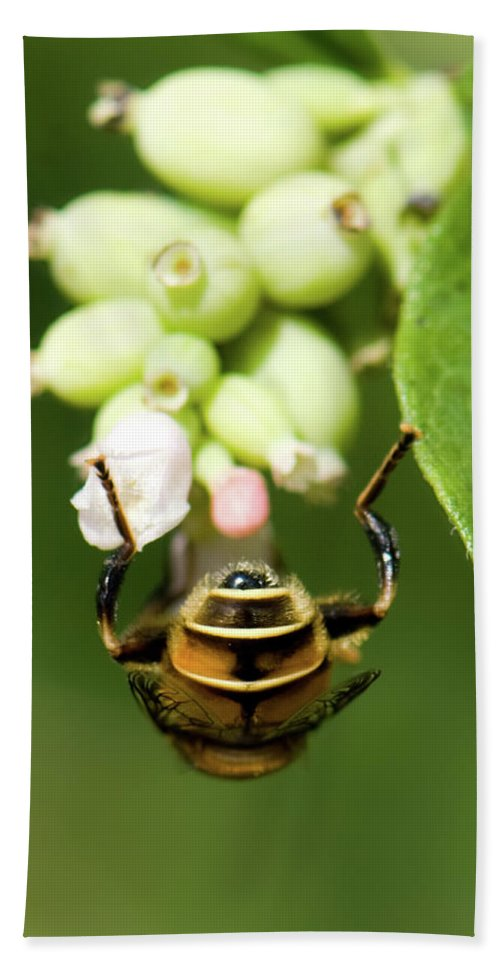 Insect Beach Towel featuring the photograph Hoverfly by Betty LaRue