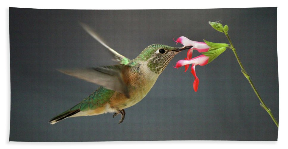 Birds Beach Towel featuring the photograph Hovering Hummer by Lauren Lang